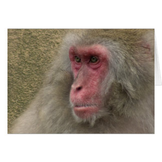 Meditative Monkey Card