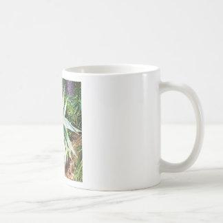 Mediterranean Cactus growing along  Italian coast Classic White Coffee Mug