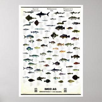 Mediterranean Fish Vintage Repro. Print