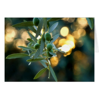 Mediterranean Gold; Olives On It's Tree Branch Greeting Card