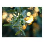 Mediterranean Gold; Olives On It's Tree Branch Photographic Print