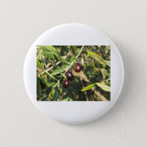 Mediterranean olive tree branches with ripe olives button
