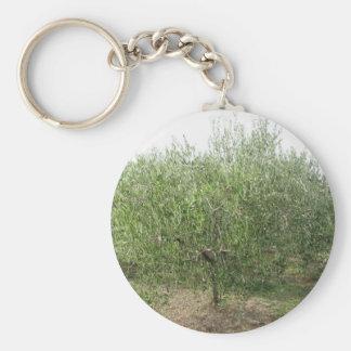 Mediterranean olive tree in Tuscany, Italy Keychain