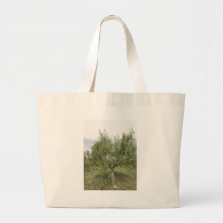 Mediterranean olive tree in Tuscany, Italy Large Tote Bag