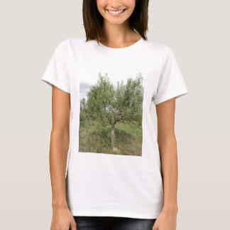 Mediterranean olive tree in Tuscany, Italy T-Shirt