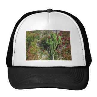 Mediterranean wall decoration with cactus trucker hat