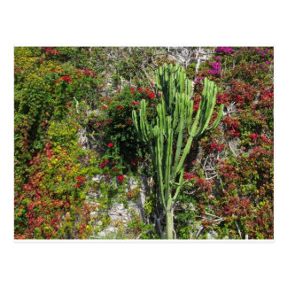 Mediterranean wall decoration with cactus postcard