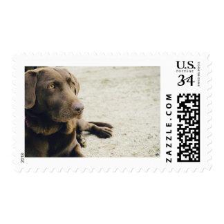 "Medium, 2.1"" x 1.3"", $0.34 (Post Card) Stamp"