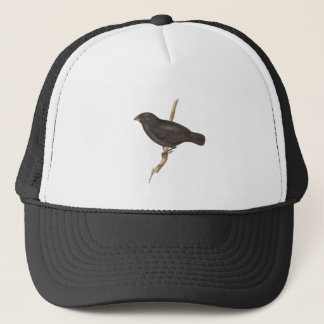 Medium Ground Finch Trucker Hat