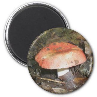 Medium Red Mushroom Magnet