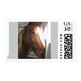 Medium U.S. Postage Stamps