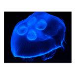 Medusas azules tarjetas postales