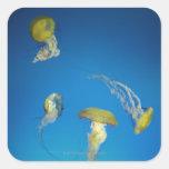 Medusas Calcomania Cuadradas Personalizada