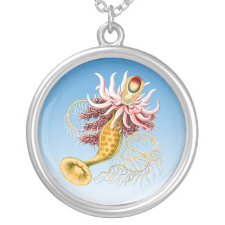 medusas grimpola