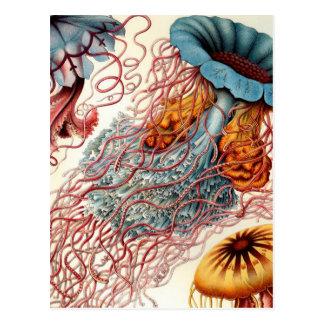 Medusas coloridas del vintage postal