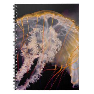 Medusas Libro De Apuntes