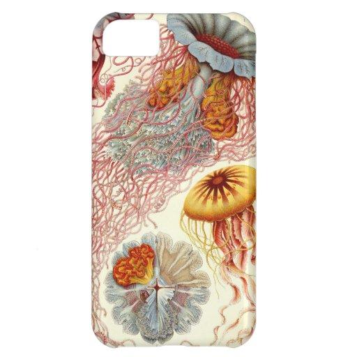 Medusas de Haeckel del vintage