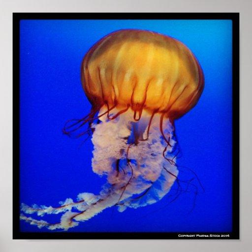 Medusas de la Costa del Pacífico Impresiones