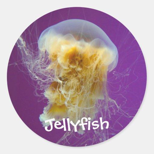 Medusas de la melena del león etiquetas redondas