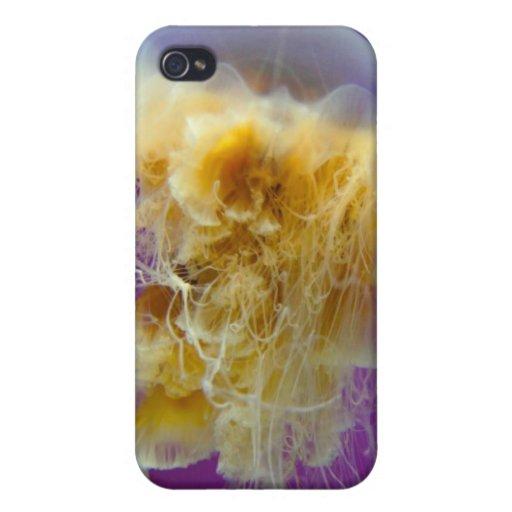 Medusas de la melena del león iPhone 4 coberturas