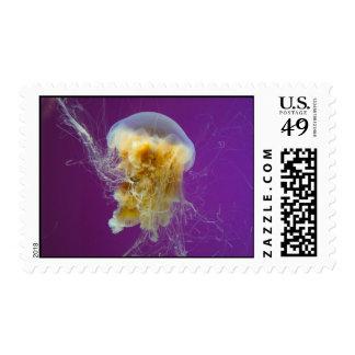 Medusas de la melena del león franqueo