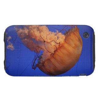 Medusas de la ortiga del mar iPhone 3 tough cobertura