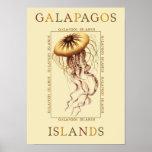Medusas de las islas de las Islas Galápagos Poster