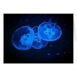 medusas felicitacion