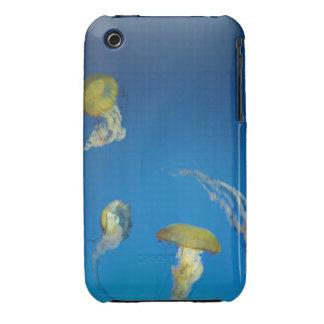 Medusas iPhone 3 Cobertura