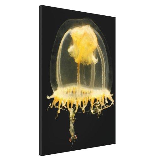 Medusas Impresión En Lienzo Estirada