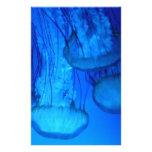 medusas papelería personalizada