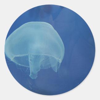 medusas pegatina