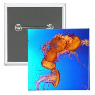 Medusas que brillan intensamente en agua azul pin