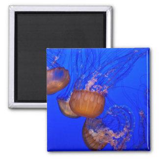 Medusas subacuáticas en el mar del agua azul imán cuadrado