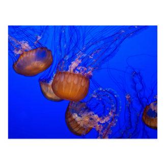 Medusas subacuáticas en el mar del agua azul tarjeta postal