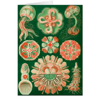 Medusas Tarjetón