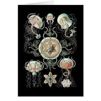 Medusas Tarjeton