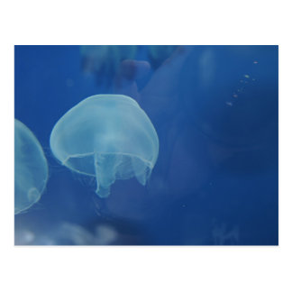 medusas postal