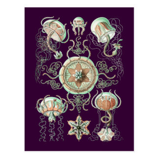 Medusas Tarjetas Postales