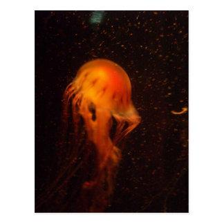 Medusas vibrantes postal