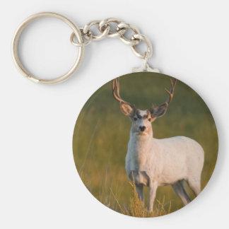 Meeker's White Buck 2 Key Chain