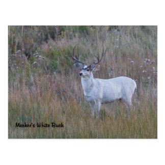 Meeker's White Deer 1 Postcard