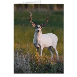 Meeker's White Deer 2 Greeting Card
