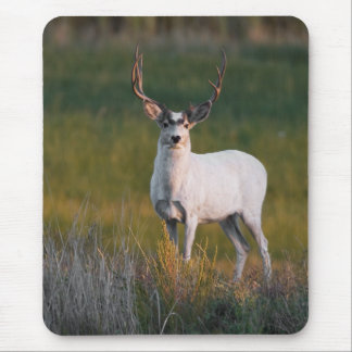 Meeker's White Deer 2 Mouse Pad