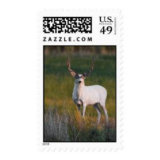 Meeker's White Deer 2 Postage