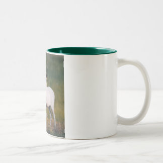 Meeker's White Deer 2 Two-Tone Coffee Mug