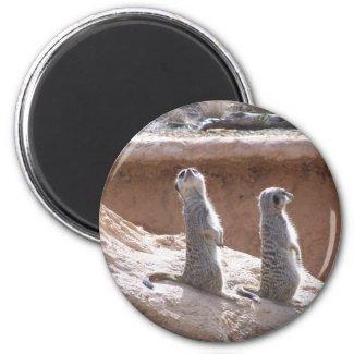 Meercat patrol Magnet magnet