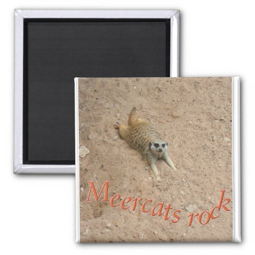 Meercats rock ! 2 inch square magnet