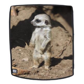 Meerkat20160203