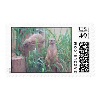 meerkat2 timbre postal
